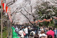 Hanami festival in Ueno park Stock Image