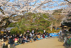 Hanami party Royalty Free Stock Image