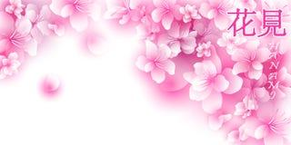 Hanami sakura background royalty free stock photos