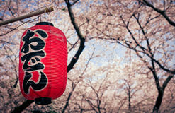 Hanami season in Japan. This is a festival lantern from Japan. Picture was taken in a park in the heart of Tokyo during cherry blossom season / hanami 2010 Royalty Free Stock Photography