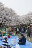 Hanami in Ueno Park Stock Photography