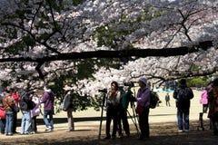 hanamifotografer tokyo arkivbild