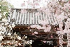 Hanamiseizoen in Nara Japan royalty-vrije stock afbeelding
