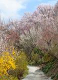 Hanamiyama (berg av blommor) parkerar, Fukushima, Japan Fotografering för Bildbyråer