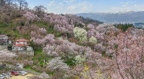 Hanamiyama (Mountain of flowers) park, Fukushima, Japan. Royalty Free Stock Photo