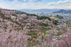 Hanamiyama (Mountain of flowers) park, Fukushima, Japan. Stock Photography
