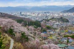 Hanamiyama (Mountain of flowers) park, Fukushima, Japan. Royalty Free Stock Images