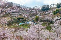 Hanamiyama (Mountain of flowers) park, Fukushima, Japan. Stock Image