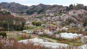 Hanamiyama (Mountain of flowers) park, Fukushima, Japan. Stock Images