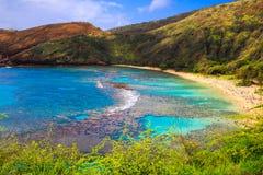 Hanauma fjärd, Oahu, Hawaii Arkivbild
