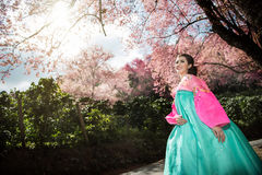 Hanbok: the traditional Korean dress and beautiful Asian girl wi. Th sakura Royalty Free Stock Photography