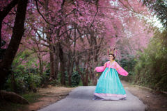Hanbok: the traditional Korean dress and beautiful Asian girl wi. Th sakura Royalty Free Stock Photo