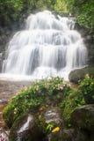 Hance del rhodocchelia de Habennaria de la selva tropical Foto de archivo