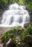 Hance rhodocchelia Habennaria от тропического леса Стоковое Фото