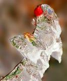 Hanche glaciale Photo stock