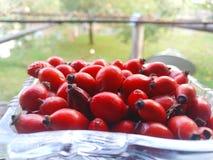Hanches rouges dans le plateau en verre gratte-culs Chien-rose Canina rose de Rosa de fruits de chien E Cynorrhodons frais photo stock