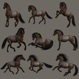 Hancock Roan Horse, 3d CG Stock Image