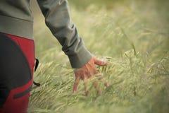 Hand über dem Weizen Stockfotos