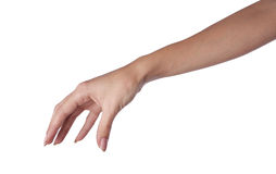 Hand. One hand in isolate background royalty free stock image