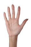 Hand. One hand in isolate background royalty free stock images