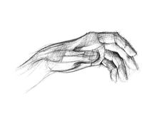 Hand. Picture by the pencil of brush and fingers of human left arm Stock Illustration