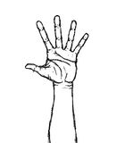 Hand. Just a hand-drawn hand (Vector Royalty Free Stock Photography