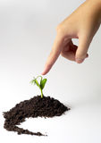 Hand. Finger pointing to growing plant Royalty Free Stock Photos