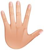 Hand royalty-vrije illustratie