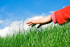 Hand above the grass. Child hand moving ahead above the grassy surface royalty free stock photo