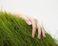 Hand above green grass Stock Images
