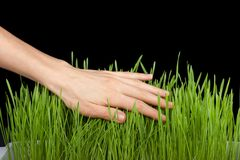 Hand above green grass Royalty Free Stock Images