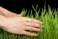 Hand above green grass Royalty Free Stock Photography