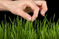 Hand above green grass Royalty Free Stock Image