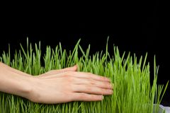 Hand above green grass Royalty Free Stock Photos