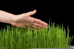 Hand above green grass Royalty Free Stock Photo