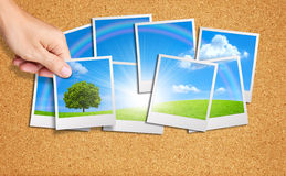 Hand add tree image into a group of nature images Stock Photo
