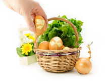Hand adding colored eggs to wicker basket Stock Photography