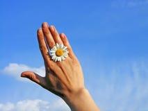 Hand&flower Photo stock