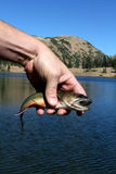 Hand of angler with fish Stock Images
