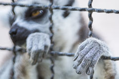 Hand animal in cage Stock Photo