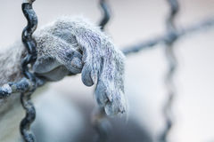 Hand animal in cage Royalty Free Stock Photography