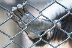 Hand animal in cage Stock Image