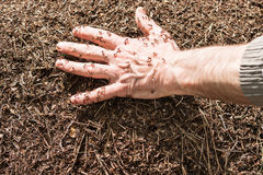 Hand in an anthill Stock Photo