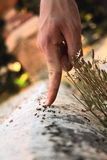 Hand on ants Stock Photo