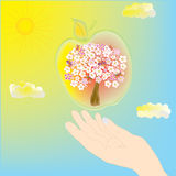 Hand and apple tree Stock Photography