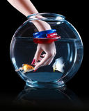 Hand with aquarium and fish Stock Image