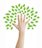 Hand as tree. Hand as a tree with green leaves concept, isolated on white, clipping path Stock Photos