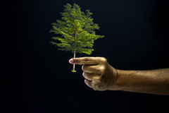 Hand pinch finger for giving a tree Stock Photo