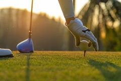 Hand asian woman putting golf ball on tee with club in golf course on evening and sunset time a for healthy sport. Lifestyle Concept Stock Image