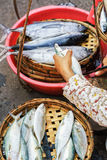 Hand of Asian woman selling fresh fish in street market Royalty Free Stock Photo